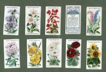 Collectable cigarette cards set Old English Garden Flowers 1920